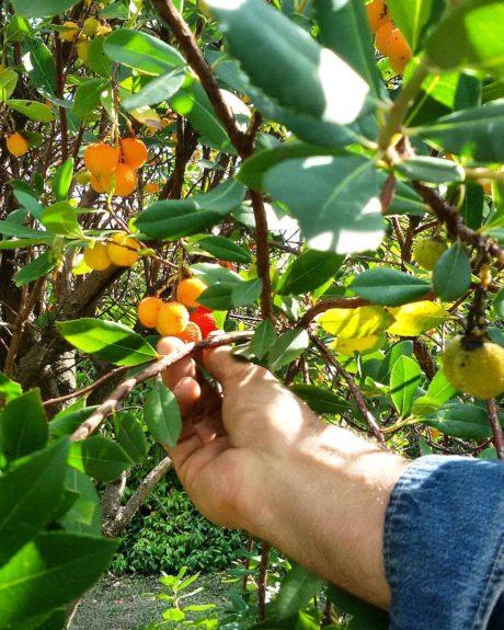 confettura artigianale extra di corbezzoli – il poggio del picchio
